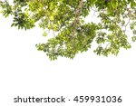 branches green leaf isolated on ... | Shutterstock . vector #459931036