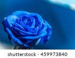 Beautiful Blue Rose On Blue...