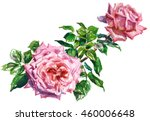 pink roses  with foliage ... | Shutterstock . vector #460006648