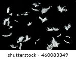 Group Of White Bird Feathers...