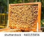 hardworking bees on honeycomb...   Shutterstock . vector #460155856