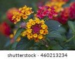 Beautiful Colorful Hedge Flowe...