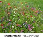 Wildflower Meadow  Flower...