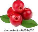 cranberry vector | Shutterstock .eps vector #460344658