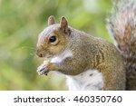 squirrel | Shutterstock . vector #460350760