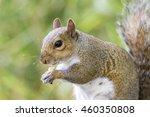 squirrel | Shutterstock . vector #460350808