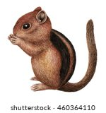 Chipmunk. Watercolor Hand Draw...
