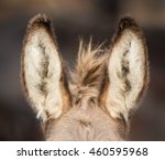 Close Up Of Donkey's Ears...
