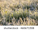 photographed close up of young ... | Shutterstock . vector #460671508