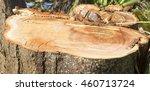 Logged Tree Stump
