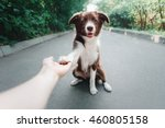 Stock photo puppy border collie gives paw 460805158