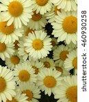 yellow summer daisies   Shutterstock . vector #460930258