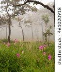 siam tulip field and mist | Shutterstock . vector #461020918
