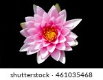Beautiful Waterlily Or Lotus O...