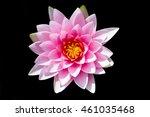 Beautiful Waterlily Or Lotus O...