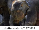 Small photo of baby elephant