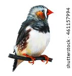 Finches Bird Drawing....
