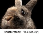 Stock photo closeup head funny little rabbit brown fur isolated on black background profile view 461236654
