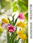 image of beautiful flowers  in...   Shutterstock . vector #461242738
