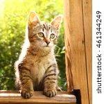Stock photo little striped gray kitten on the summer plants background outdoor portrait 461344249