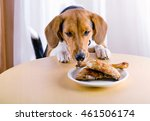 beagle dog looking  to chicken... | Shutterstock . vector #461506174