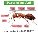 diagram showing parts of ant...