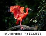 beautiful red bird  scarlet... | Shutterstock . vector #461633596