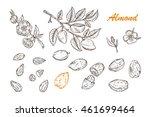hand drawn almonds set  ...   Shutterstock .eps vector #461699464