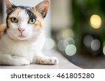 Closeup Cat  Bokeh Background
