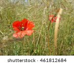 beautiful red poppies among...   Shutterstock . vector #461812684