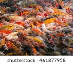 fancy carp fish or koi fish are ... | Shutterstock . vector #461877958