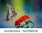 Beautiful Butterfly And Flower...