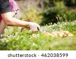 hand of woman with white gloves ... | Shutterstock . vector #462038599