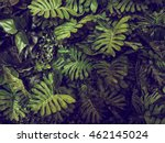 Green Monstera Leaves Texture...