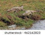 Two Adult Crocodile Lying On...