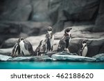 Humboldt Penguins Standing In...