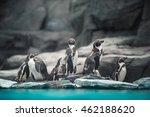 Humboldt Penguins Standing In...