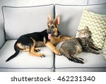 Stock photo cute cat and funny dog on couch 462231340