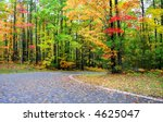 Colorful Trees By The Road In...