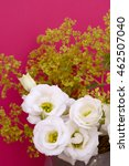 Small photo of White tulip gentian flowers and frondy alchemilla mollis against a deep pink background