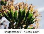exotic flowering tree with a... | Shutterstock . vector #462511324