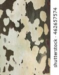 Small photo of Wooden texture. Platan tree