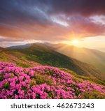 mountain flowers in the meadow. ... | Shutterstock . vector #462673243