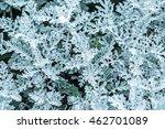 silver grass | Shutterstock . vector #462701089