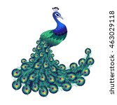 colorful peacock for your... | Shutterstock .eps vector #463029118