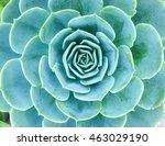 vegetable | Shutterstock . vector #463029190