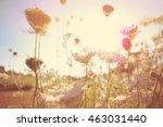 field of queen anne's lace ... | Shutterstock . vector #463031440