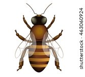 honey bee vector illustration... | Shutterstock .eps vector #463060924
