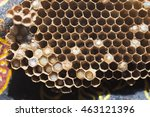 nest of wasp have baby wasp | Shutterstock . vector #463121396