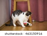 Stock photo cat playing with toys 463150916